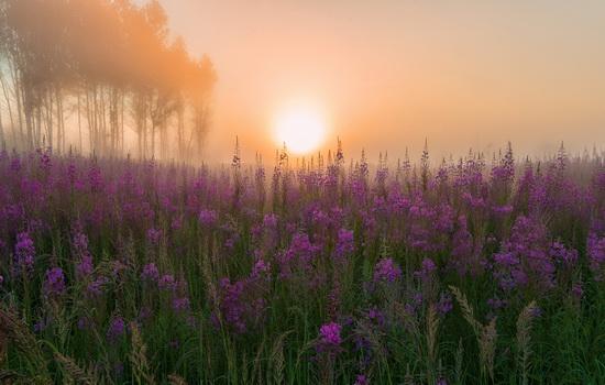 Yaroslavl region nature, central Russia, photo 13
