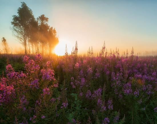 Yaroslavl region nature, central Russia, photo 15
