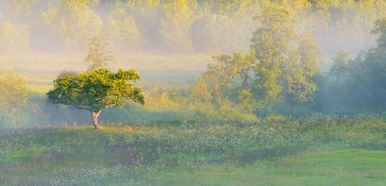 Yaroslavl region nature, central Russia, photo 5