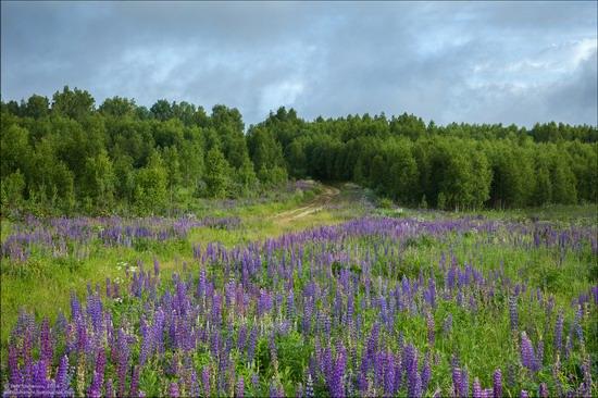 Summer landscapes, Smolensk region, Russia, photo 12