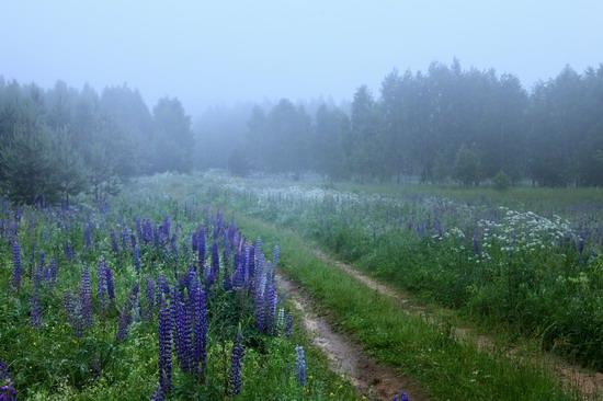 Summer landscapes, Smolensk region, Russia, photo 14