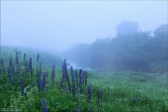 Summer landscapes, Smolensk region, Russia, photo 2