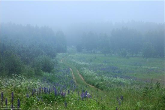 Summer landscapes, Smolensk region, Russia, photo 4