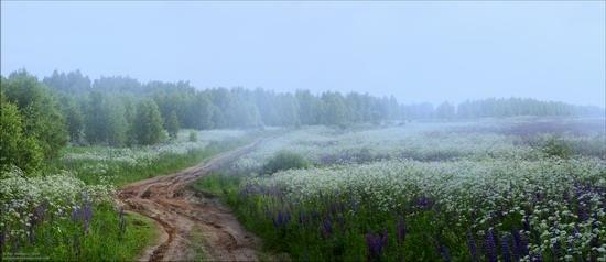 Summer landscapes, Smolensk region, Russia, photo 5