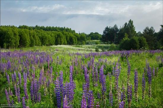 Summer landscapes, Smolensk region, Russia, photo 6