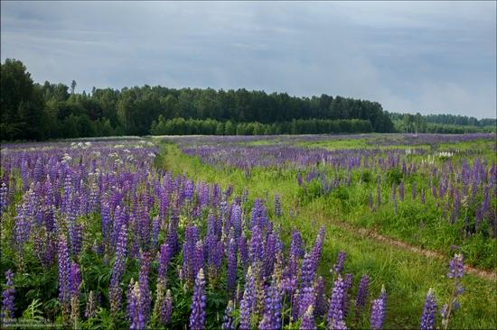 Summer landscapes, Smolensk region, Russia, photo 9