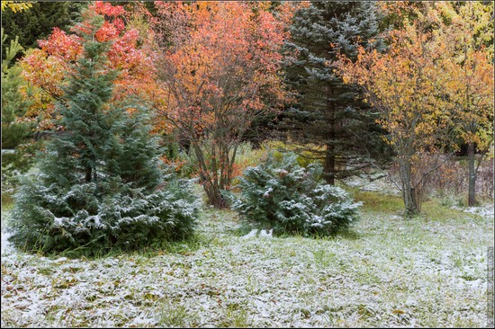 The first snow in the village of Blagoveshchenye, Moscow region, Russia, photo 2