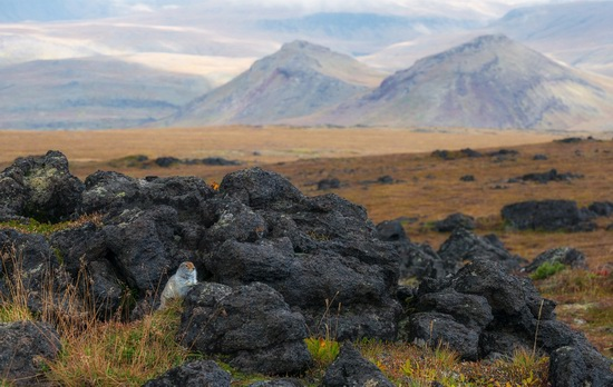 Kamchatka volcanoes, Russia, photo 20