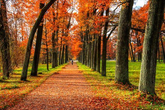 Golden Autumn in Tsarskoye Selo, St. Petersburg, Russia, photo 4