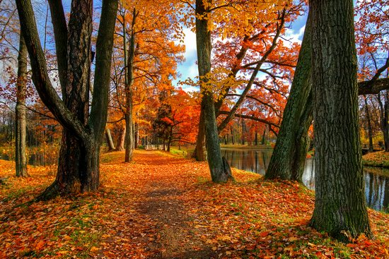 Golden Autumn in Tsarskoye Selo, St. Petersburg, Russia, photo 6