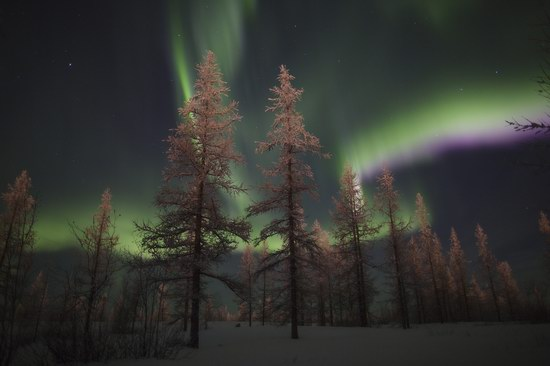 Polar Lights, Novy Urengoy, Russia, photo 1