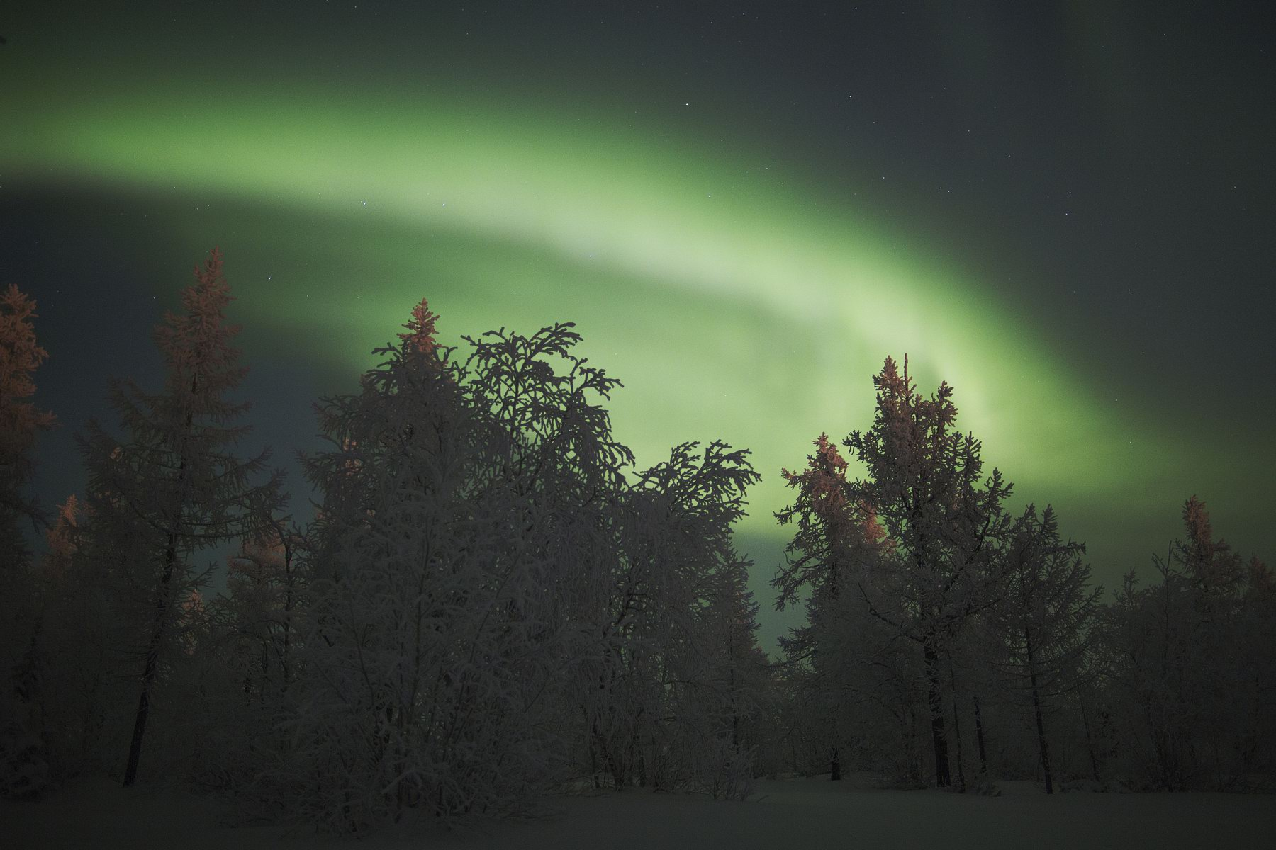 Russian North Polar 61