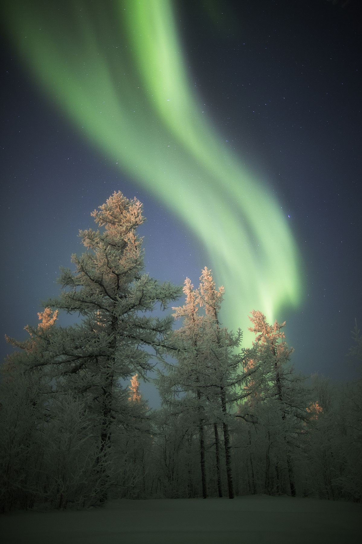 Russian North Polar 65