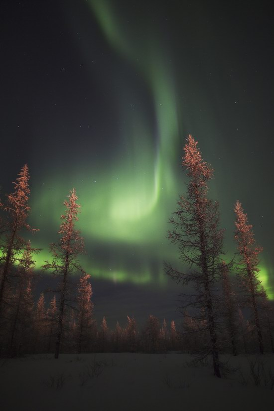 Polar Lights, Novy Urengoy, Russia, photo 5