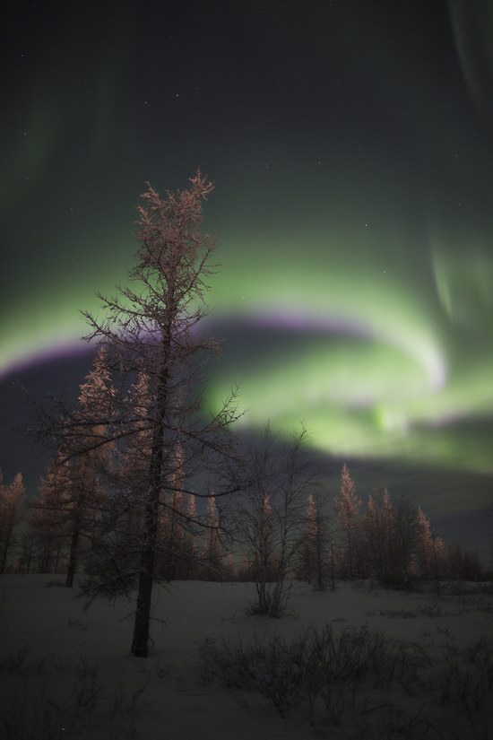 Polar Lights, Novy Urengoy, Russia, photo 6