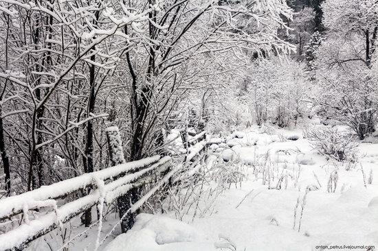 Snowy winter on Lake Teletskoye, Russia, photo 2