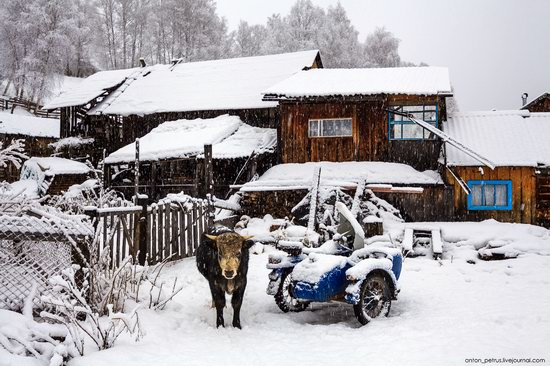 Snowy winter on Lake Teletskoye, Russia, photo 4