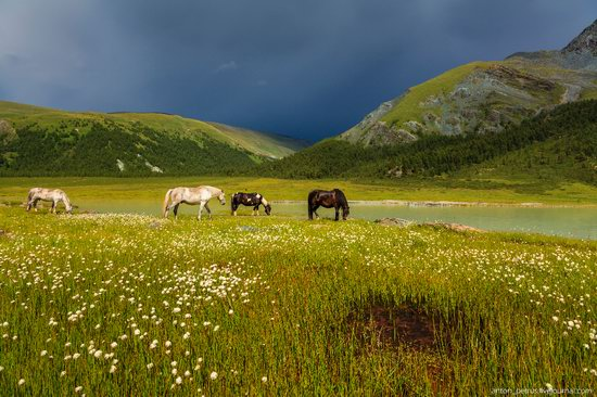 Lake Akkem, Altai Republic, Russia, photo 3