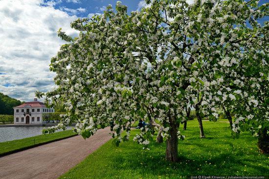 Spring in Peterhof museum, St. Petersburg, Russia, photo 19