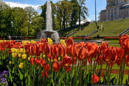 Spring in Peterhof museum, St. Petersburg, Russia, photo 2