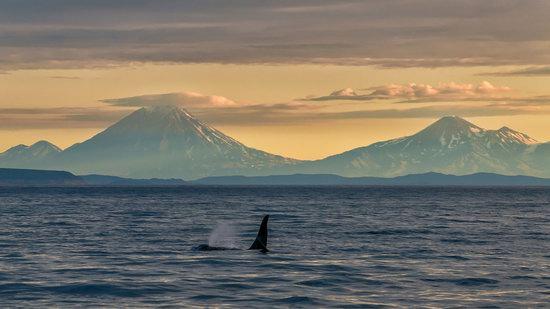 The eastern coast of Kamchatka, Russia, photo 10