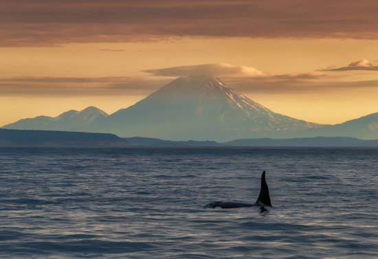 The eastern coast of Kamchatka, Russia, photo 9