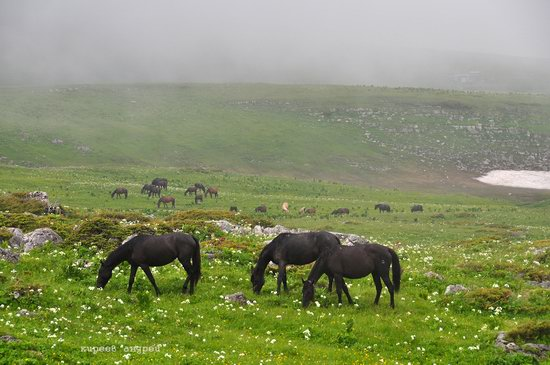 Lago-Naki Plateau, Caucasus, Russia, photo 3