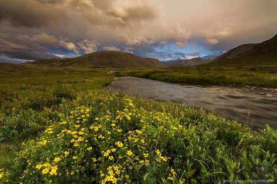 Wild flowers, Altai, Russia, photo 18