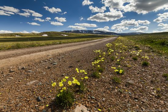 Wild flowers, Altai, Russia, photo 8