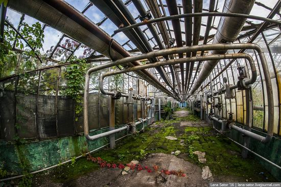 Abandoned greenhouse complex near Moscow, Russia, photo 15
