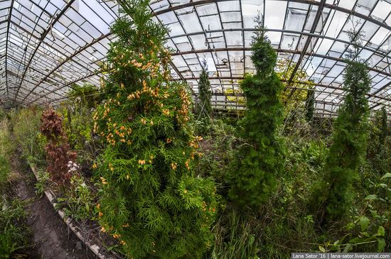Abandoned greenhouse complex near Moscow, Russia, photo 24