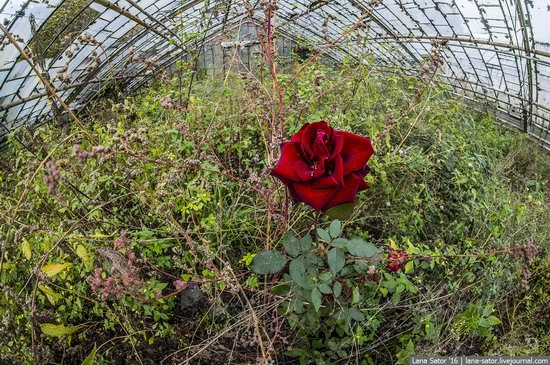 Abandoned greenhouse complex near Moscow, Russia, photo 30