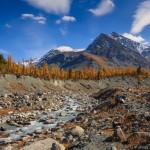 Golden Autumn in the Altai Mountains