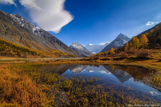 Golden autumn in the Altai Mountains, Russia, photo 10