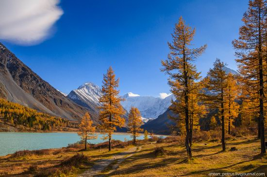 Golden autumn in the Altai Mountains, Russia, photo 11