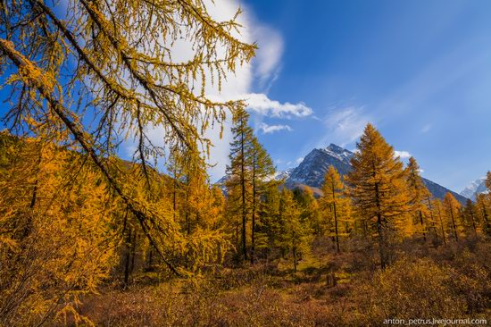 Golden autumn in the Altai Mountains, Russia, photo 2