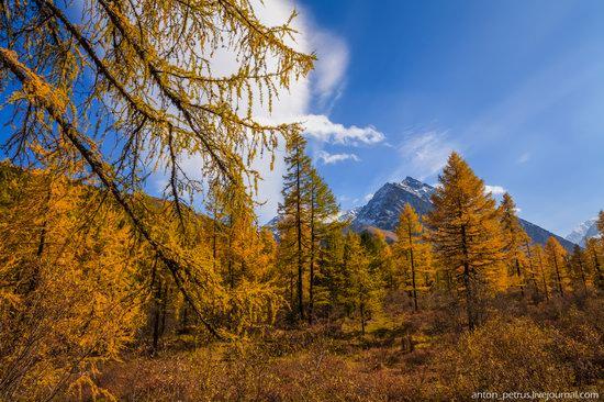 Golden autumn in the Altai Mountains, Russia, photo 2