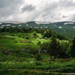 Alpine Meadows of Lago-Naki Plateau