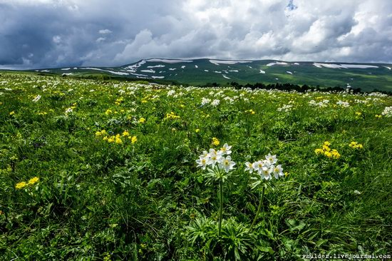 Alpine Meadows, Lago-Naki Plateau, Russia, photo 13