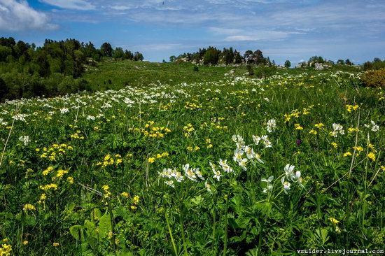 Alpine Meadows, Lago-Naki Plateau, Russia, photo 14