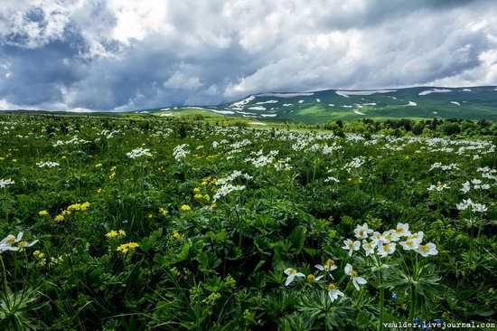 Alpine Meadows, Lago-Naki Plateau, Russia, photo 15