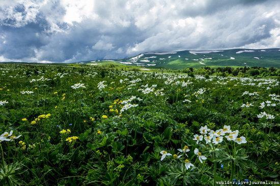 Alpine Meadows, Lago-Naki Plateau, Russia, photo 15