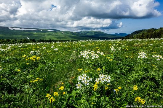 Alpine Meadows, Lago-Naki Plateau, Russia, photo 18