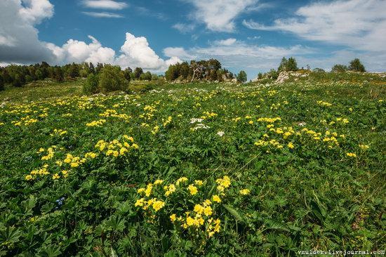 Alpine Meadows, Lago-Naki Plateau, Russia, photo 20