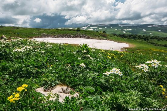 Alpine Meadows, Lago-Naki Plateau, Russia, photo 21