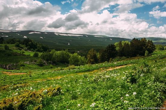 Alpine Meadows, Lago-Naki Plateau, Russia, photo 3
