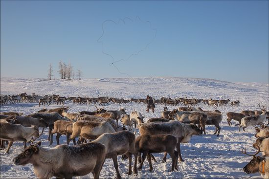 Life of the Nenets Reindeer Herders in the Russian North, photo 11