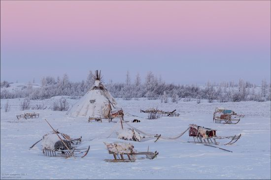 Life of the Nenets Reindeer Herders in the Russian North, photo 15
