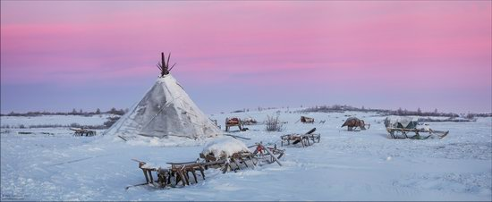 Life of the Nenets Reindeer Herders in the Russian North, photo 19