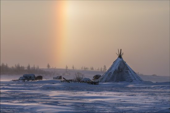 Life of the Nenets Reindeer Herders in the Russian North, photo 2